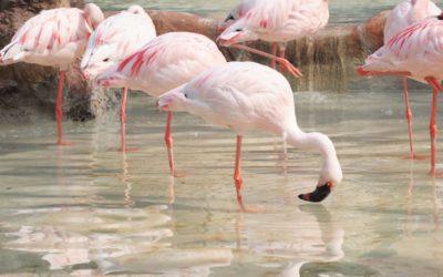 Alla scoperta di Lio Piccolo e dei fenicotteri rosa