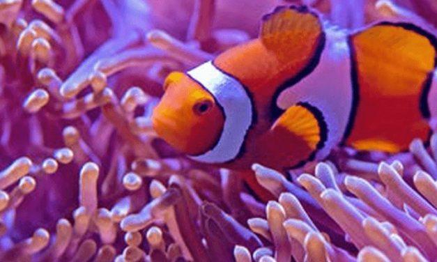 Sea Life Aquarium di Jesolo, vicino Venezia un parco marino tutto da scoprire!