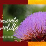 Il carciofo violetto di Sant'Erasmo